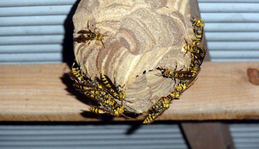 物置にキアシナガバチの巣発見!こいつらは攻撃的だ気をつけよう