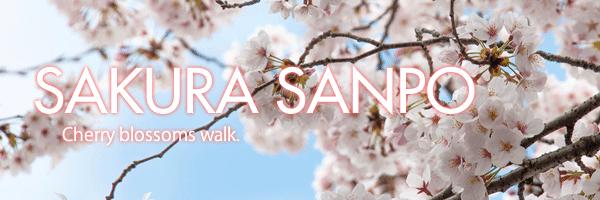 about-sakura