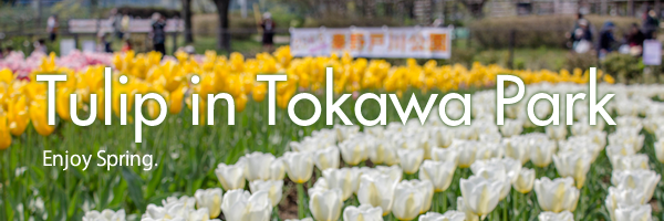 tokawapark2016