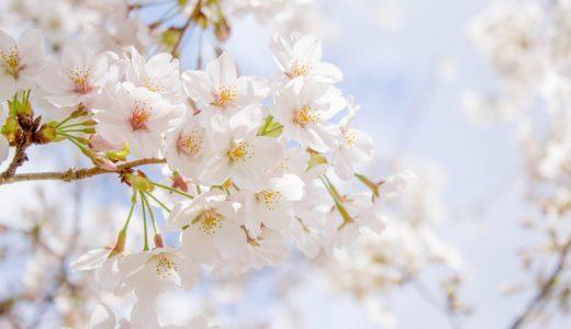 さくら散歩 – 今年の桜は遅かったね – 2017