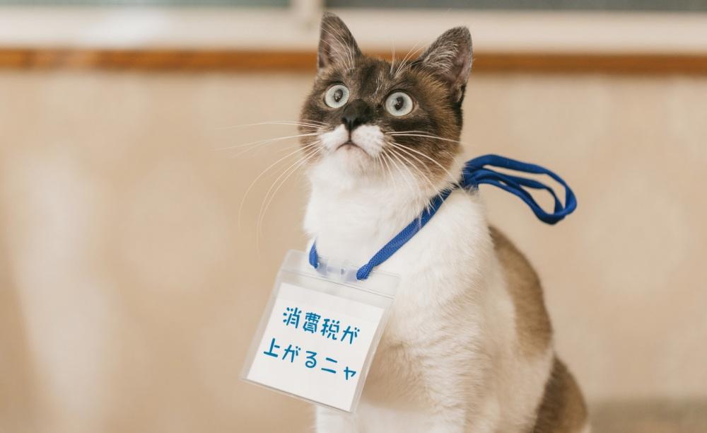 消費税増税の猫