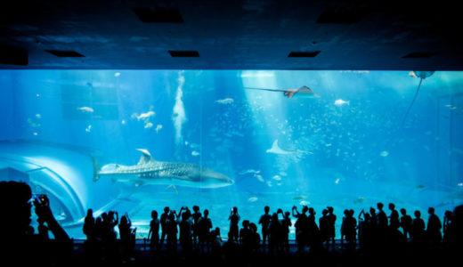 沖縄の定番!ジンベイザメがいる「美ら海水族館」へ行きました