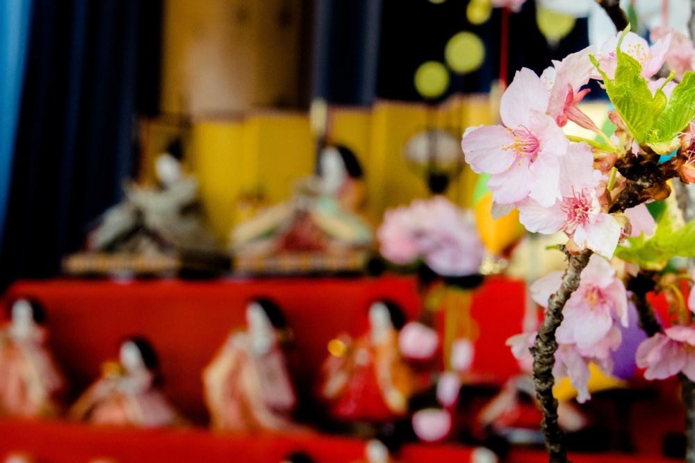 雛人形と河津桜