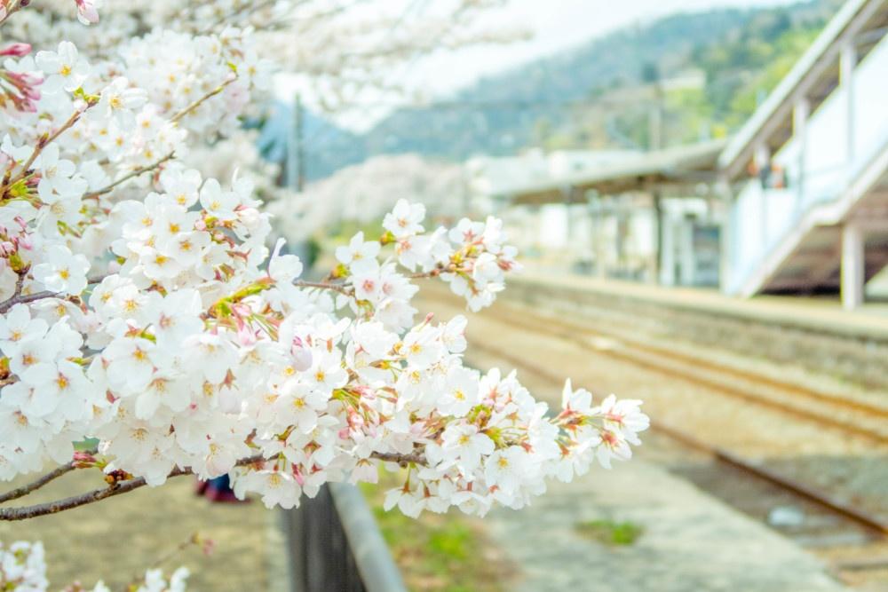 山北駅舎とソメイヨシノ