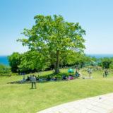 湘南地域の隠れた絶景スポット二宮町「吾妻山公園」