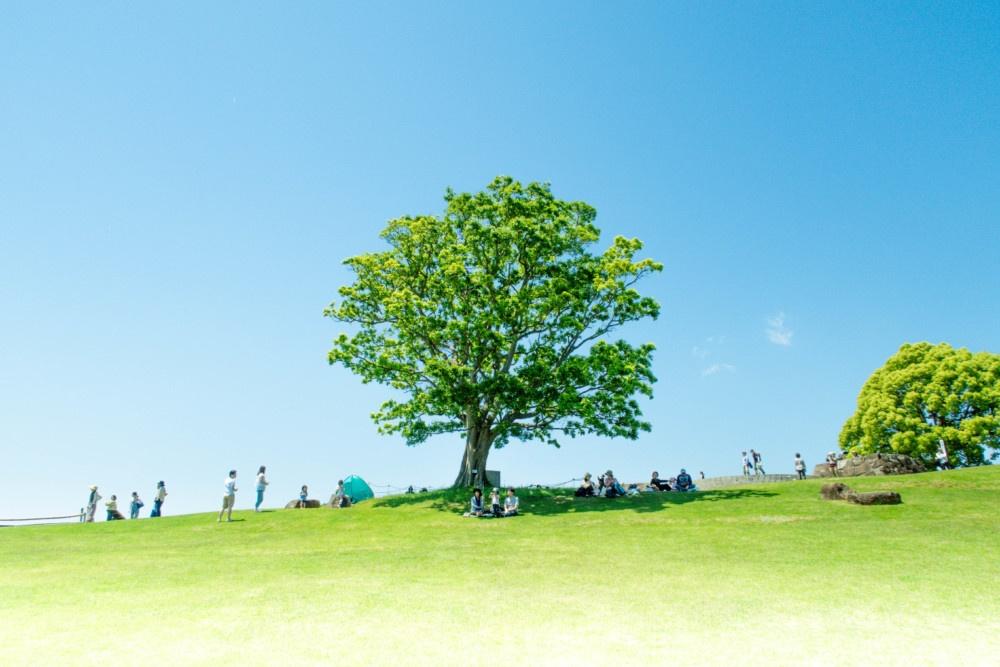 吾妻山公園シンボルツリー「ぶなの木」