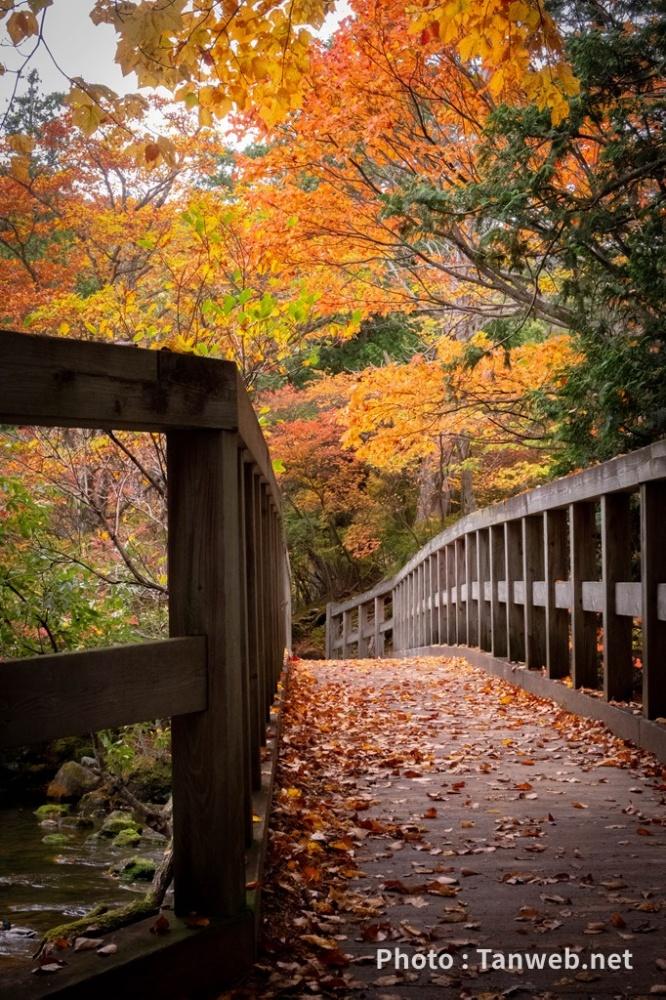 湯の湖畔の小橋