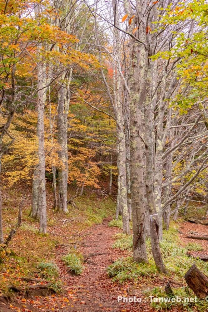 湯の湖畔の林道散歩道