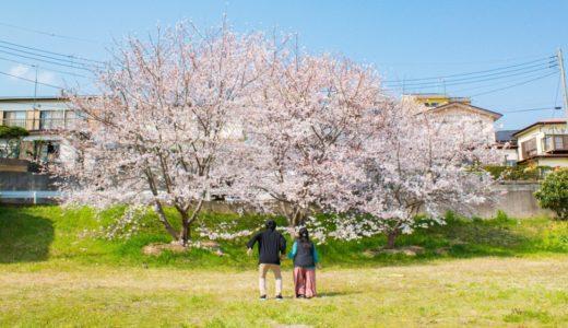 さくら散歩 2019 - 桜が入学式の頃に満開だった珍しい年でした