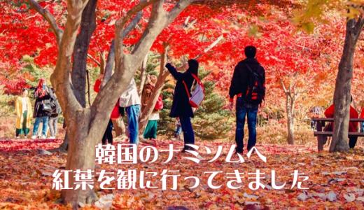 冬ソナで有名な韓国「ナミソム(南怡島)」へ紅葉を観に行ってきました
