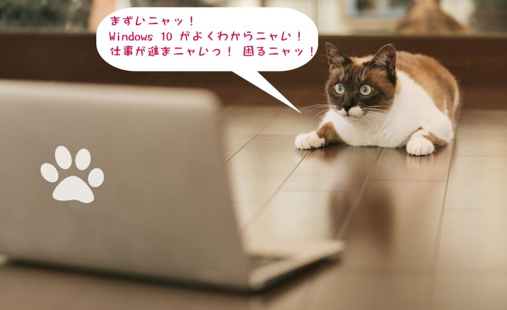 Window1 0 の操作方法がよくわかならい猫