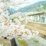 桜と山北駅