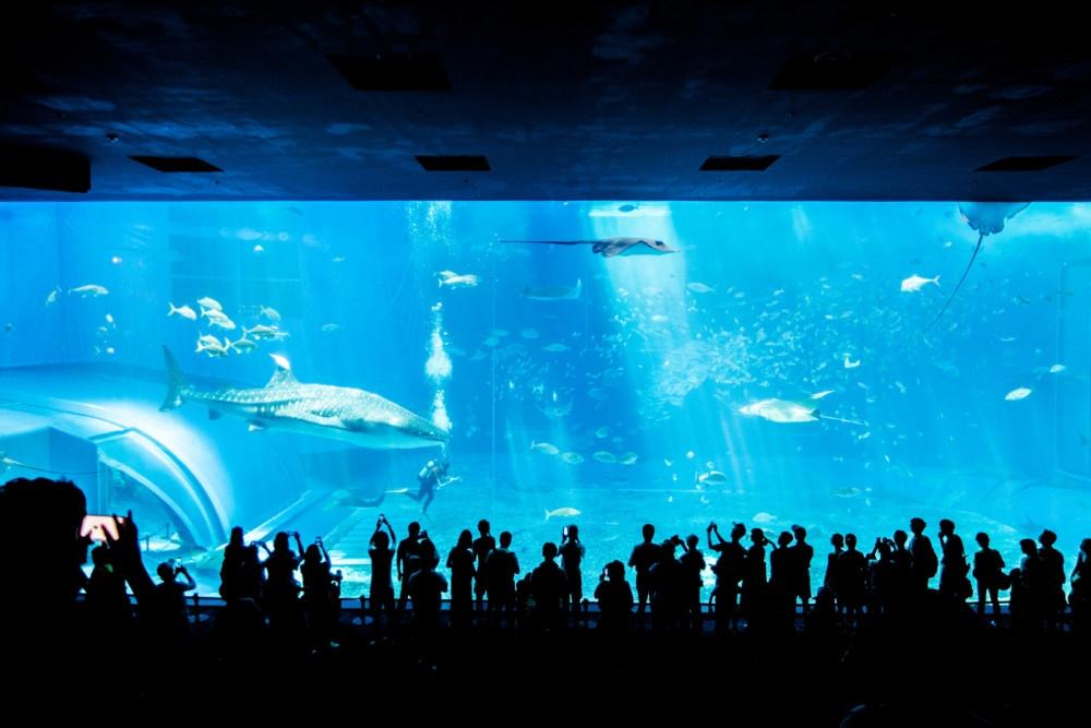 ジンベイザメのいる巨大水槽(美ら海水族館)
