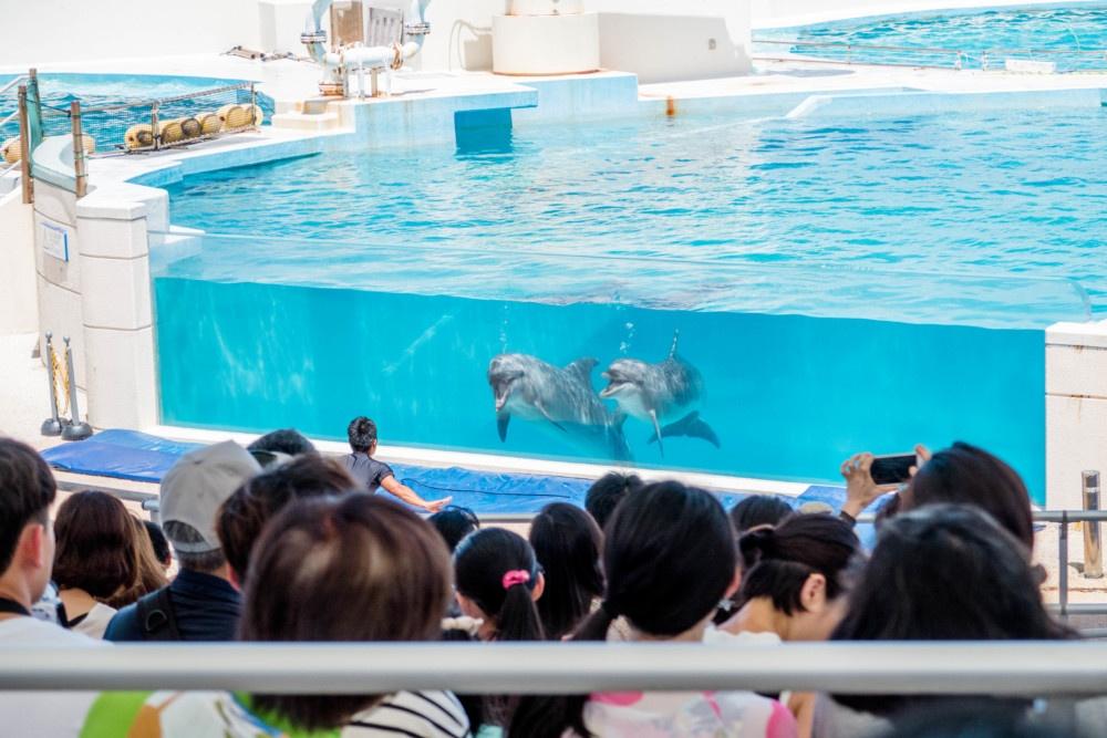美ら海水族館 イルカ