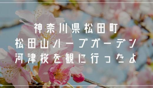 神奈川県「松田山ハーブガーデン」へ河津桜を観に行ってきました