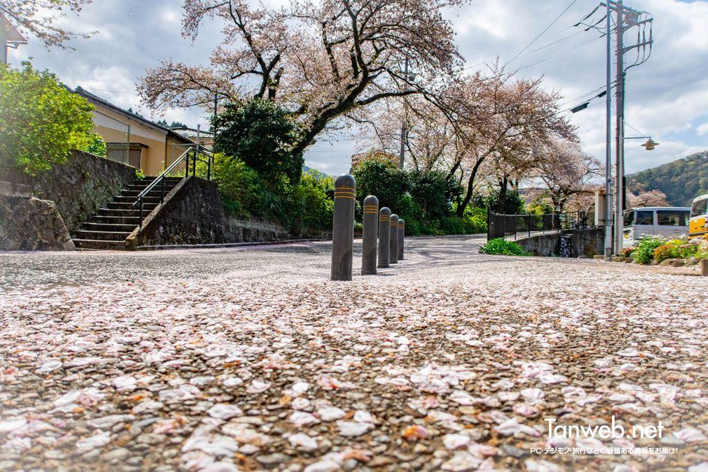 毎年訪れる「山北鉄道公園」へ桜の散り際を観賞しに03