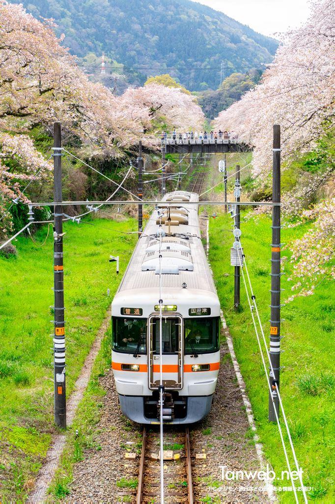 桜の木と御殿場線02